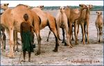 Kamelhirte, Somalia.