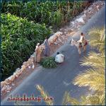 Fellachen im Nil-Tal, Ägypten.