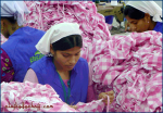 Textilarbeiterinnen, Dhaka (Bangladesch).