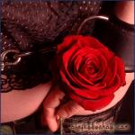 Rose und Handschelle.